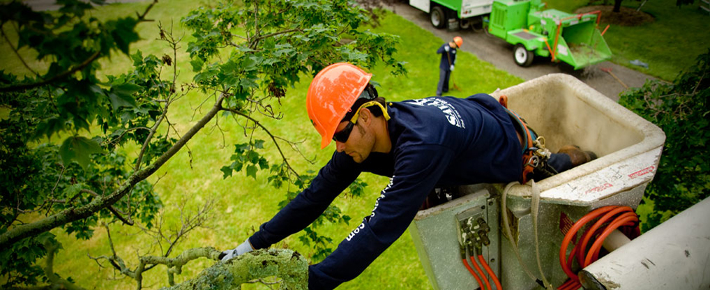 Tree Service Tips and Importance