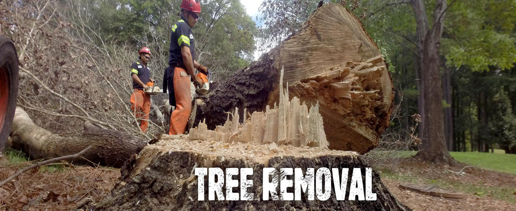Why Big Tree Removal is Necessary
