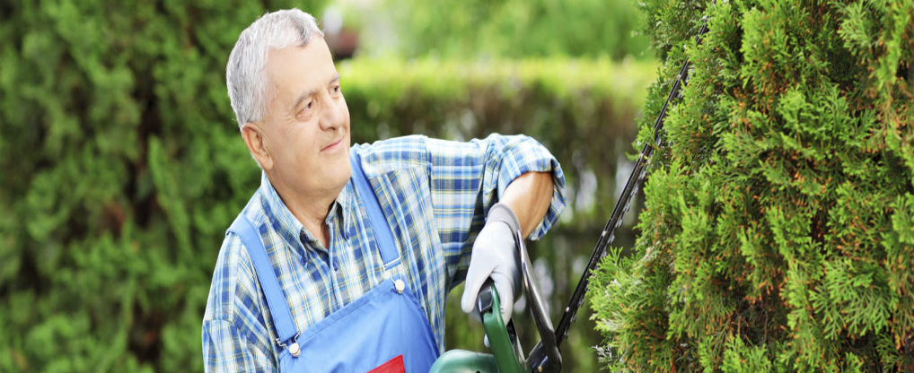 Choose A Dependable Tree Service Company