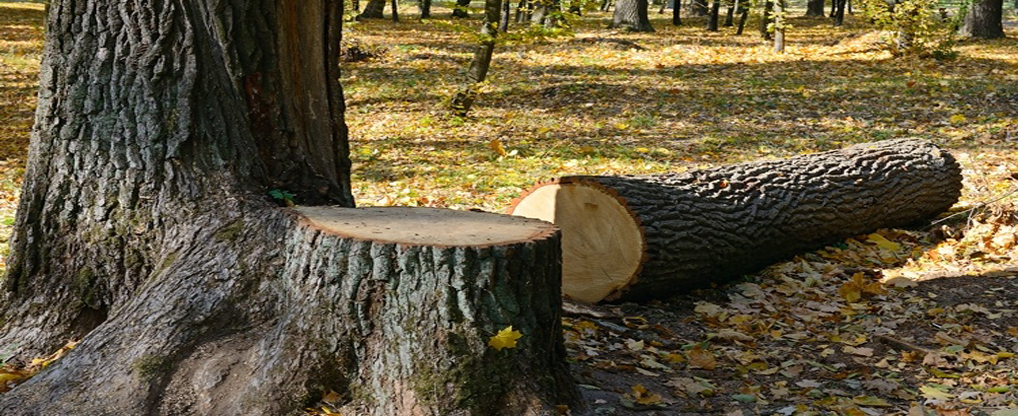 Ways to Remove Tree Stumps