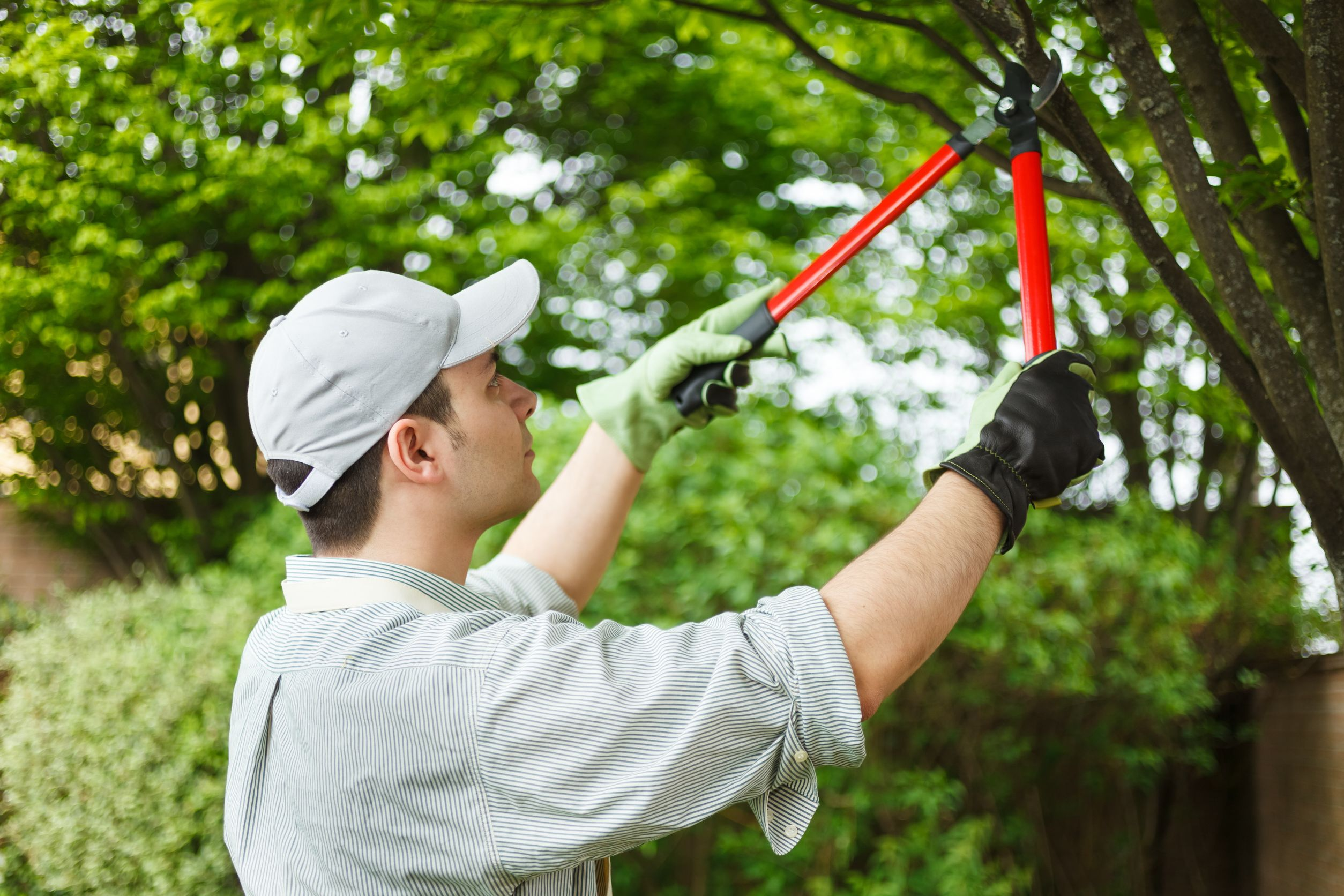Tree Maintenance and Removal Guide